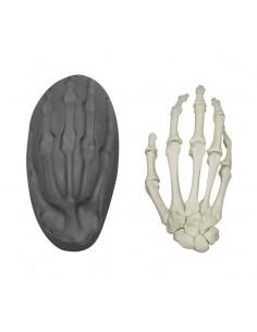 Erler Zimmer, modello anatomico funzionale di cervello, scomponibile in 5 parti